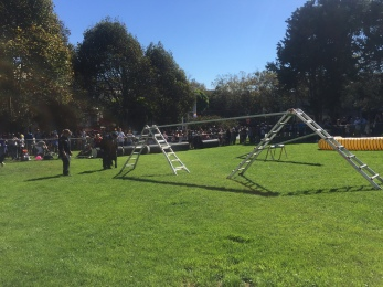 Bark in the park obstacle course, What it's really like to live in San Francisco, Living in San Francisco, Expat San Francisco, San Francisco as a Brit, San Francisco Living, Expat life, Expatriate in San Francisco