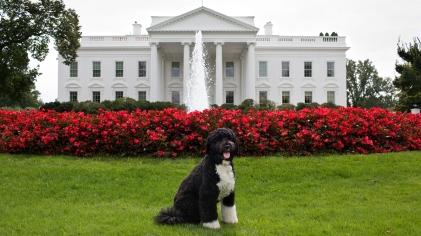 Obamas dog
