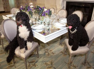 Obama's dogs