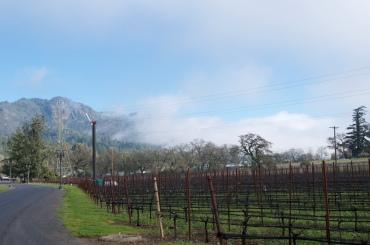 Fog at Ledson Vineyards