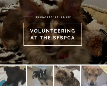Volunteering at SFSPCA, SFSPCA Volunteers, Volunteering, Volunteerism, San Francisco Volunteer, San Francisco Life, San Francisco Expats, Expat life in San Francisco, Local San Francisco, Locals in San Francisco, San Francisco Volunteer Opportunities, SF Blog, SF Blogger, San Francisco Blog, San Francisco Blogger, North Beach Blog, North Beach San Francisco, Telegraph Hill blogger, Volunteering with dogs in San Francisco