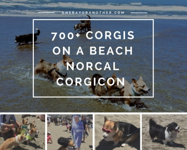 Norcal Corgicon, Corgis on a beach, Corgicon, Corgi Meetings, Corgis together, Ocean Beach San Francisco, Ocean Beach SF, SF Blog, SF Blogger, San Francisco Blog, San Francisco Blogger, San Francisco Life, San Francisco Local, San Francisco as an Expat, Expat life in San Francisco, Dog conference, Dog lovers SF, Only in San Francisco, Weird San Francisco, Ocean Beach Events SF, California Travel, California Road Trip, San Francisco Travel Tips, San Francisco Guide, Guide to San Francisco