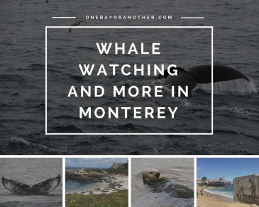 Whale Watching in California, Whale Watching in Monterey, Whale Watching in the USA, California Road Trip, California Wildlife, California Travel Tips, California Travel Advice, California Travel Blog, California Whales, SF Blog, San Francisco Blog, SF Blogger, San Francisco Blogger, Monterey California, Things to do in Monterey, Monterey Travel Tips, Traveling in California, Carmel-by-the-Sea, Go Whales, The best Whale Watching Tour in Monterey, Whale watching in Monterey Bay, Monterey Bay, Expat in American, Life as an expat, Expat Life