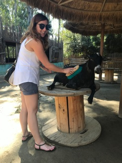 Brushing my goat friend at San Diego Zoo Safari Park, California Road Trip, San Diego Visit, Things to do in San Diego