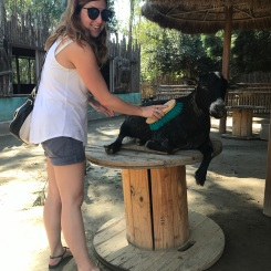 Brushing my goat friend at San Diego Zoo Safari Park, California Road Trip, San Diego Visit, Things to do in San Diego