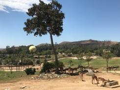 San Diego Zoo Safari Park on the Behind the Scenes Tour