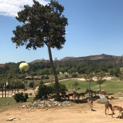 San Diego Zoo Safari Park on the Behind the Scenes Tour