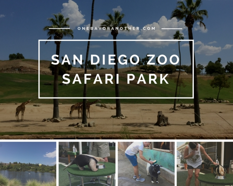 San Diego Zoo Safari Park, Visiting San Diego Zoo Safari Park, San Diego Travel Tips, Animal Experiences in San Diego, San Diego California, San Diego Travel Tips, San Diego Road trip, San Diego Holiday, San Diego Vacation, Things to do with Kids in San Diego, Why visit San Diego, SF Blog, SF Blogger, California Blog, California Blogger, California Life, Expat Life