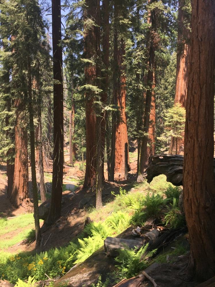 Giant Sequoias in Sequoia National Park, Sequoia National Park, Hiking in Sequoia, Sequoia hikes, Sequoia moderate hike, Hiking in California, California Road trip, California travel, road trip to Sequoia, San Francisco to Sequoia, Wildflowers in Sequoia, Where should I hike in Sequoia, Where should I hike in California, California Hiking, California Walking, Sand Francisco Expat, San Francisco Travel, California Holiday, California Vacation, Tips for Sequoia, Sequoia National Park Hike, Sequoia National Park walking, Sequoia National park tips, Sequoia National Park Guide, What to Pack When Day Hiking in Sequoia, Mehrten Meadow, Three Rivers Sequoia, Alta Peak Day Hike, Alta Peak Hike, Alta Peak day Hike Sequoia, What to take on a hike in Sequoia,